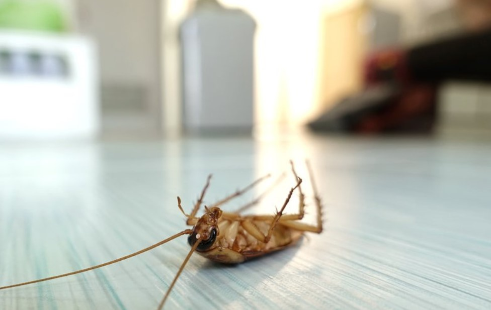 What to Do Before and After Pest Control Service